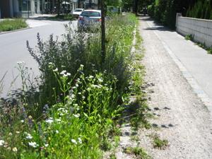 Insektenfreundliche Bepflanzung